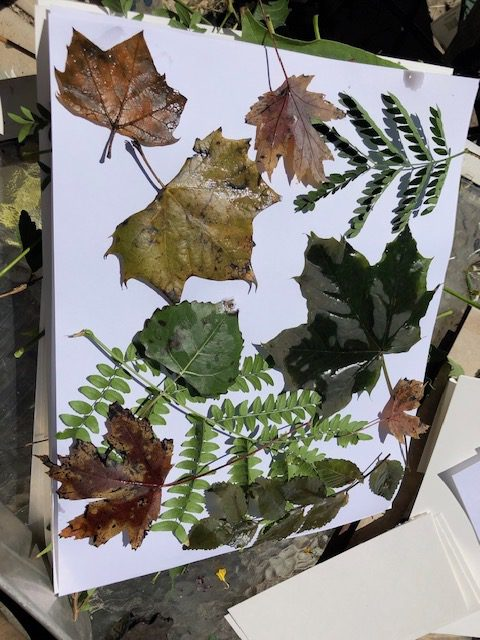 leaves both fresh and dried for eco printing