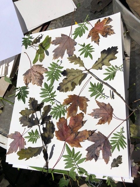 eco print layout of leaves on paper