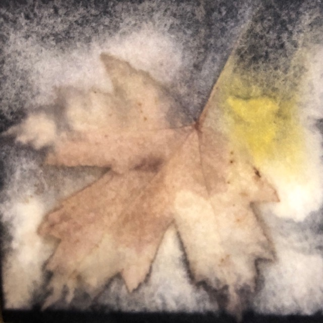 maple leaf eco print on paper