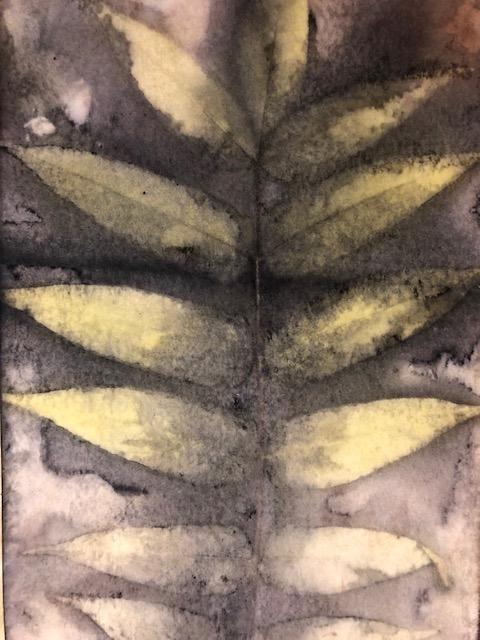 ailanthus altissima tree of heaven leaf print