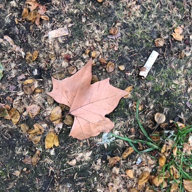 leaf and cigarette as example of artistic observation