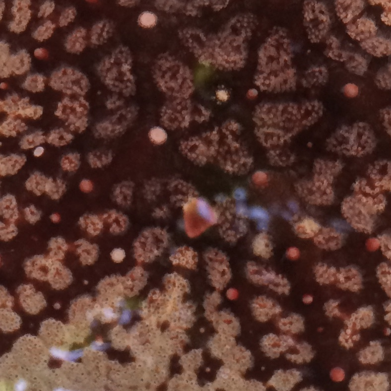 extreme closeup of a starfish showing pattern
