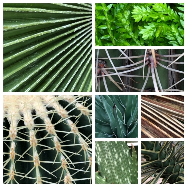 plant textures demonstrate artistic line