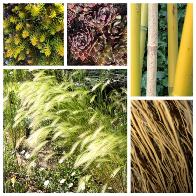 collage of plants showing texture and pattern