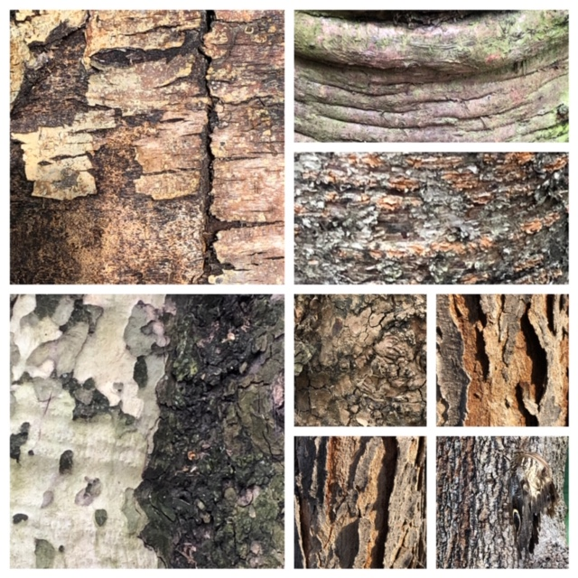 examples of texture illustrated with tree bark
